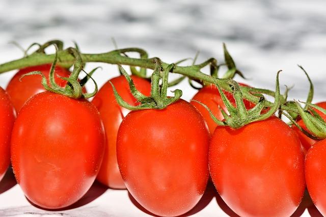 bush rajčata