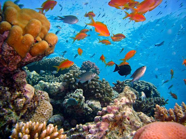 korálový útes a rybky